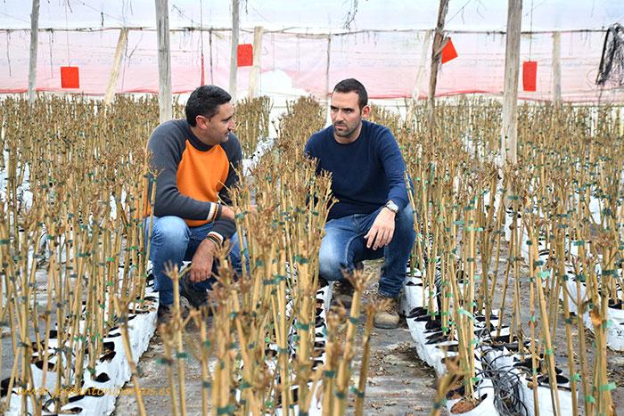 Juan Miguel Rubio y Sergio Navarrete con granados en el vivero de Caliplant, Murcia.