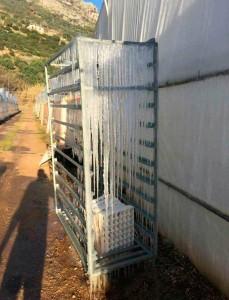 Italia. Efectos de la ola de frío sobre la agricultura Foto de invernadero de calabacín afectado por las heladas