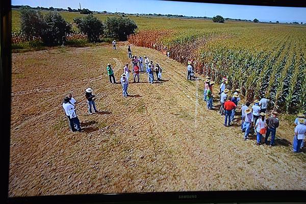 Grandes cultivos de semillas Fitó en la feria agrícola de Don Benito, Agroexpo 2017. Maíz y girasol