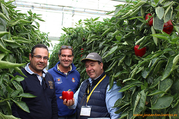 Omar Kaidi, de HM Clause muestra 'Abraham' junto a dos agricultores roqueteros: Antonio Fernández y Paco Vizcaíno.