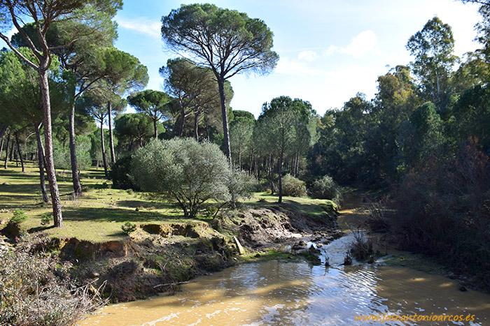 Entorno de Doñana, Huelva.