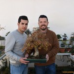 Los amigos de los bonsáis