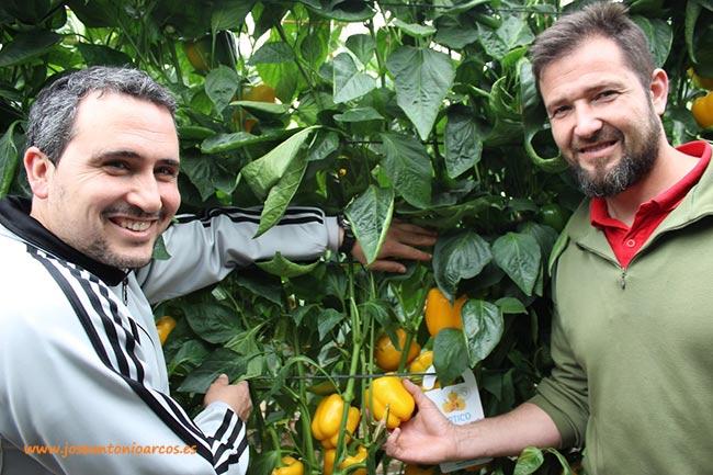 Cristóbal y Paco, agricultores de Albuñol, con 'Artico'.