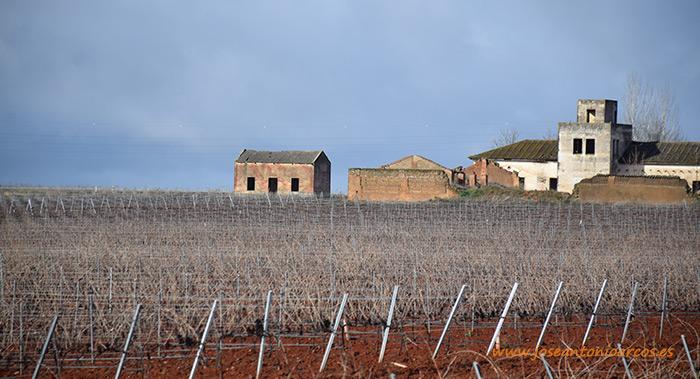 Viñedos de la provincia de Badajoz, Extremadura.