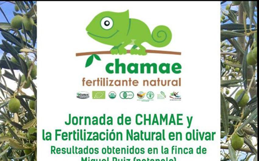 Día 23 de febrero. Jornada de Chamae y la fertilización natural en olivar. Huelva