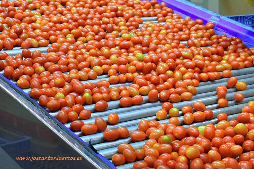 Citrocide® Plus T de Citrosol para el lavado higiénico de tomates.