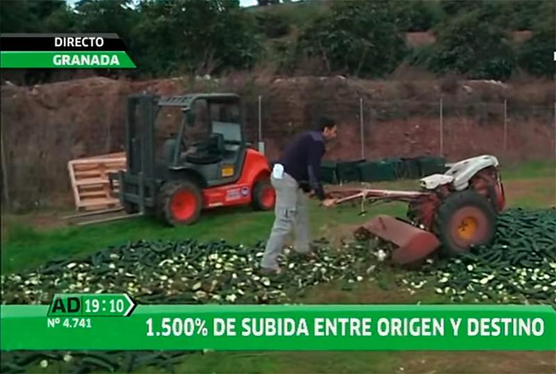 Un agricultor destruye 3.000 kilos de calabacín ante las cámaras de TV (vídeo)