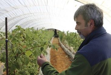 La bioagricultura en los frutos rojos onubenses (vídeo)