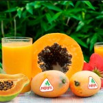 Biosabor llevará hasta Berlín la papaya almeriense