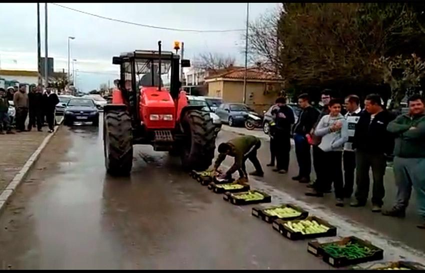 Agricultores gaditanos destruyen calabacín por bajos precios (vídeo)