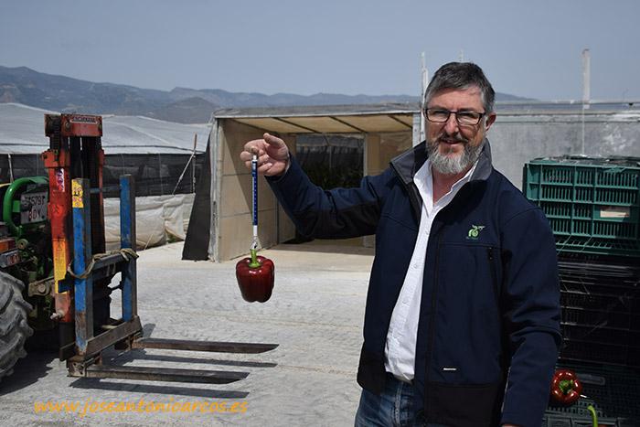 Alberto Domingo Marín, delegado comercial de Rijk Zwaan Ibérica.
