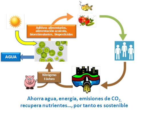 La Junta andaluza impulsa una biorrefinería de microalgas marinas para producir productos sostenibles como fertilizantes o piensos