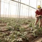 Coag y Ceres ensalzan el papel de la mujer en la agricultura