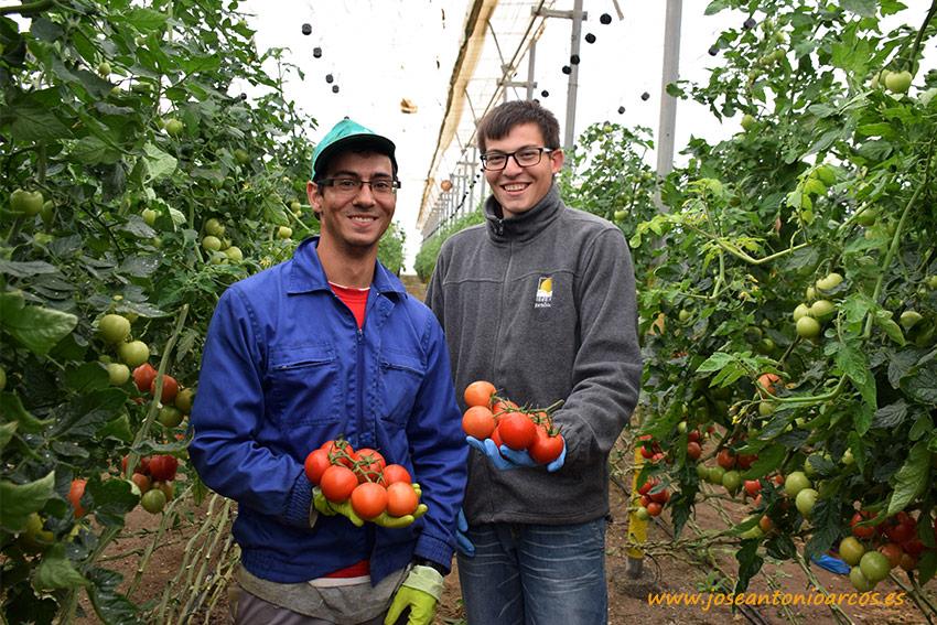 Los tomates cervantinos de la CASI