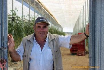 La costa granadina acoge el nuevo cherry de Clause: menor calibre y más sabor