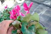 Projar mejora la aireación y drenaje de las plantas de temporada