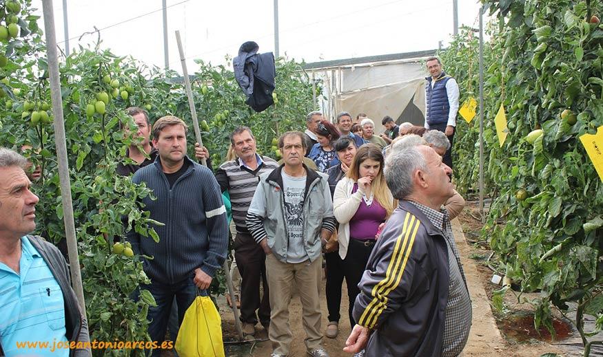 Tomates en El Ejido. Pera y verde ensalada para ciclos cortos