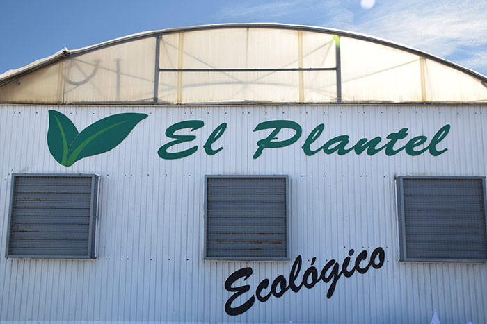 El Plantel Semilleros en Níjar. Semillero de plántulas para la agricultura ecológica.