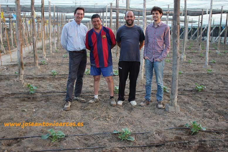 En el invernadero de Antonio Delgado también con melón piel de sapo.