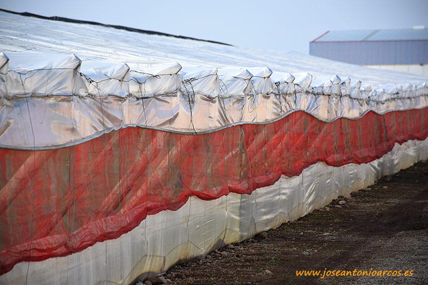 Pelemix innova con mallas rojas y de aluminio para invernaderos