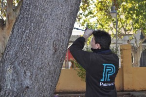 Servicios profesionales de jardinería de Paimed. Grupo Projar
