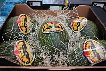 Grupo Agroponiente prevé 50 millones de kilos de sandía y 20 de melón