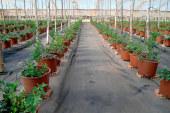 Projar lleva a Infoagro su gama ecológica