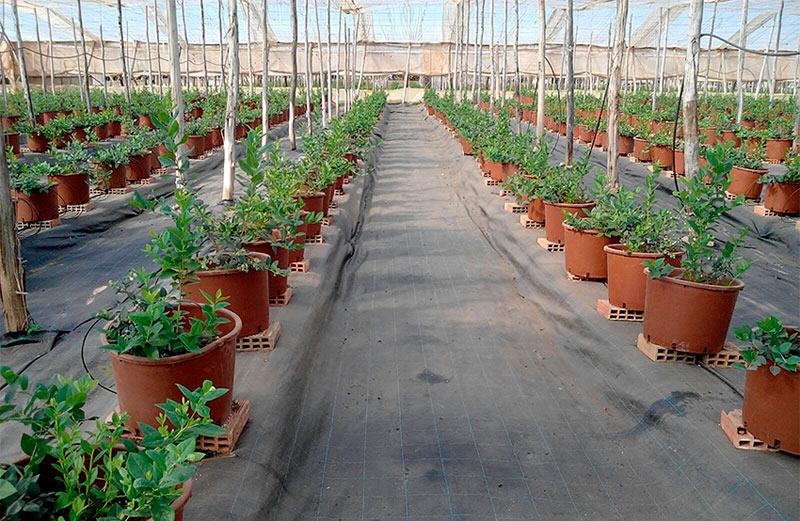 gama de productos aptos para la agricultura ecológica