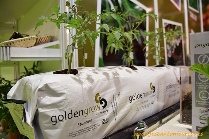 Golden Grow de Projar.