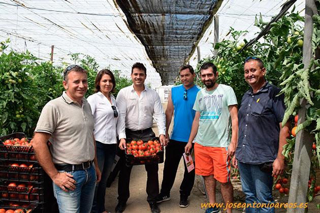Tomate pera Nikomate de Hazera España