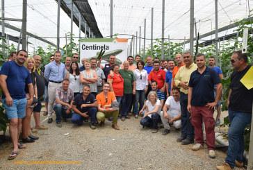El nuevo pepino extratemprano de Hazera permite un triple cultivo por campaña