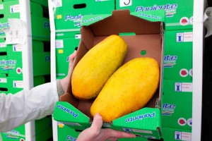 Papayas de Agroponiente.