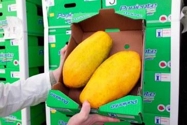 Agroponiente entra en los tropicales con las papayas