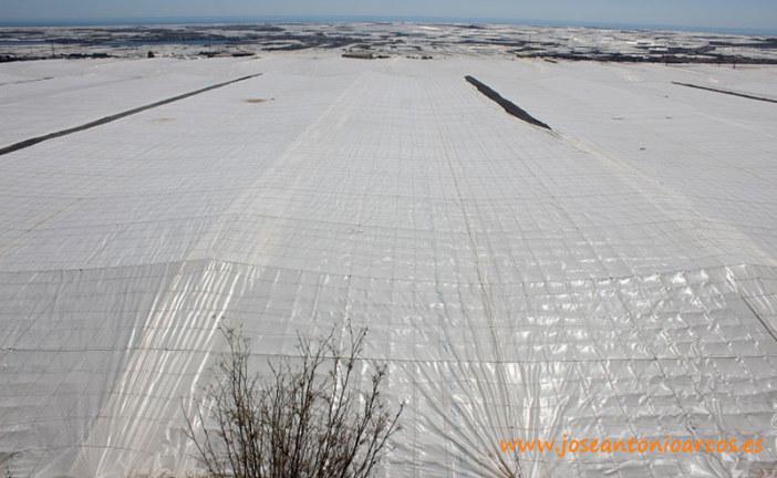 Las licencias para nuevos invernaderos en El Ejido crecen un 66% este año