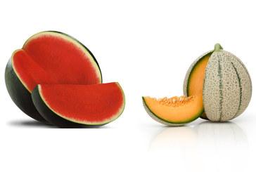Novedades para esta campaña de Fitó en melón y sandía