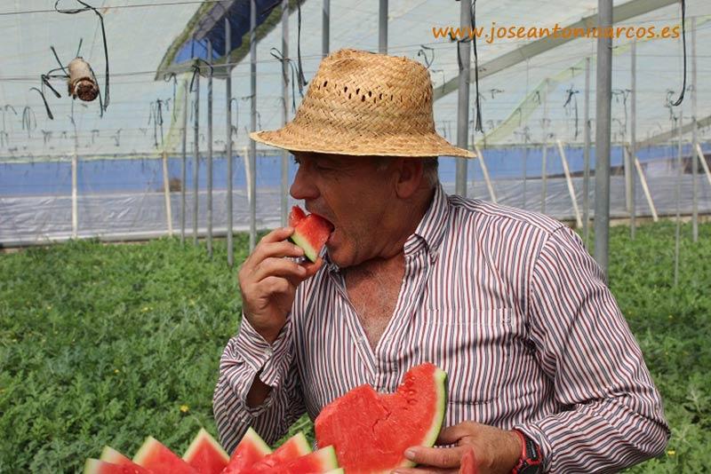 Miguel Peralta, agricultor de Balanegra, degustando Casilda.