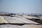 El Ejido gestiona 200 licencias de invernaderos en seis meses