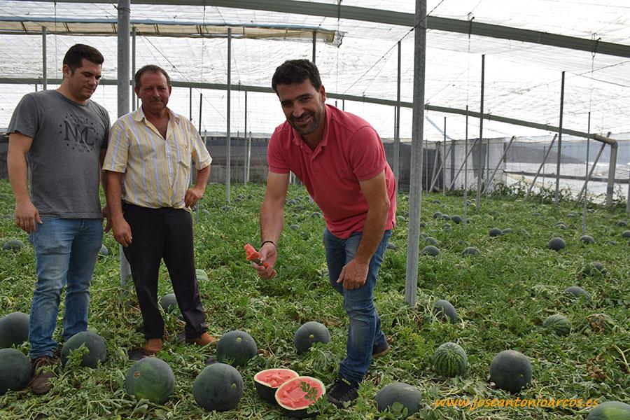 El agricultor y su técnico, el cortador y la sandía. Fashion, la negra sin pepitas