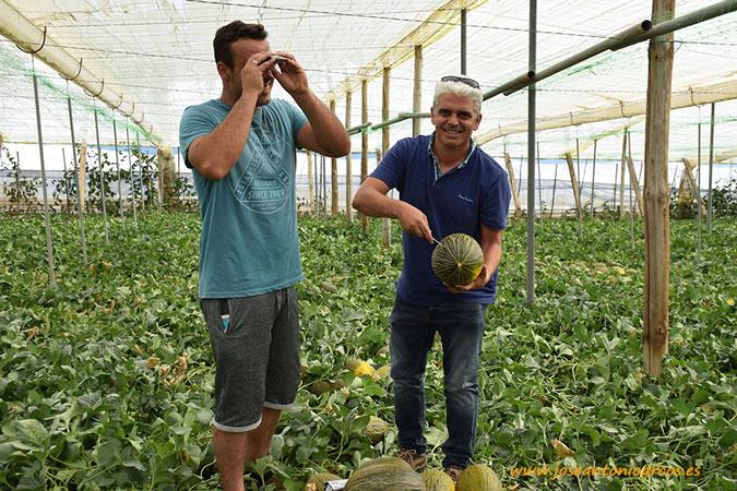 Óscar Ortega y Jorge Bervel midiendo el azúcar de Miranbel. Melón piel de sapo de Ramiro Arnedo en invernaderos de Almería.