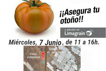 Día 7 de junio. Jornada de campo de tomate de Hazera. Níjar