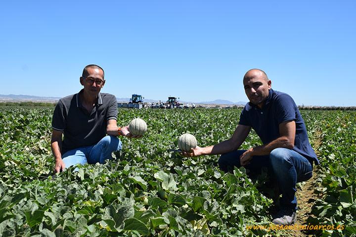 José Manuel Talavera y Angelo Tjhie muestran la nueva variedad Candilo.