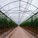 Lo que no se sabe de los cultivos de invernadero