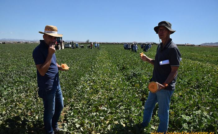Gautier mete la cabeza en el cultivo de melón al aire libre