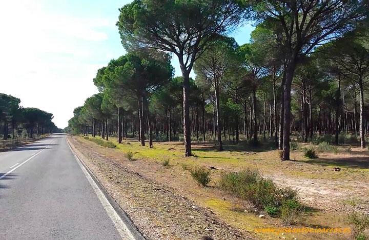 El entorno de Doñana en Huelva.