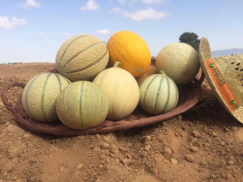 Melones-Gautier2
