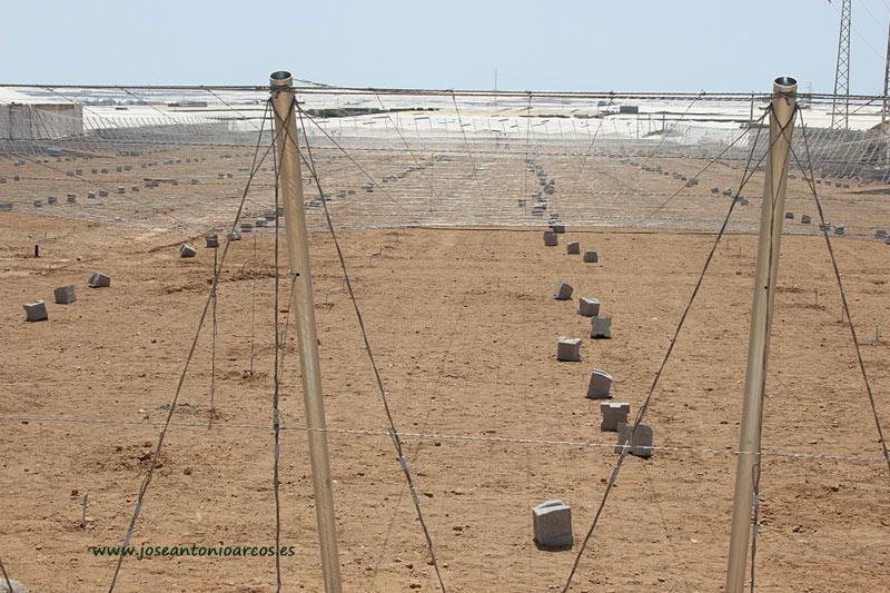 La Junta convoca 10 millones de euros para modernizar invernaderos