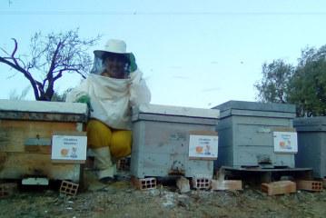 Arranca el Aula Apícola y Medioambiental Bee Garden