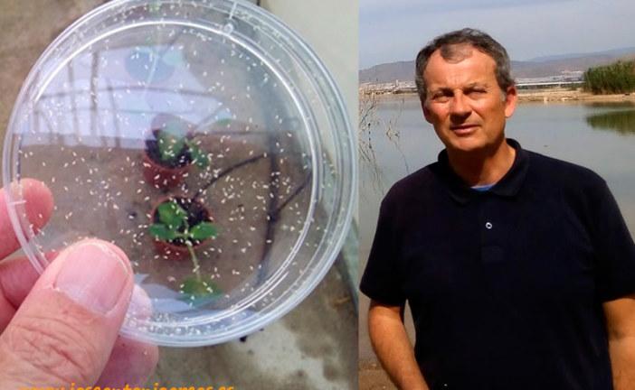 El virus Nueva Delhi se puede controlar con swirskii (entrevista)