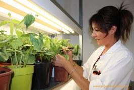 El proyecto Bloster genera 5 nuevos biopesticidas frente a plagas