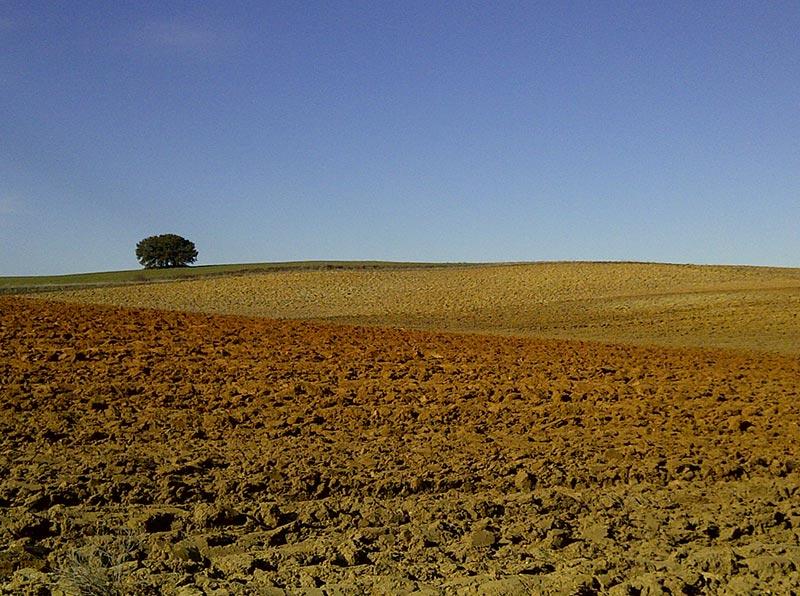 La degradación del suelo en España. Un problema de todos
